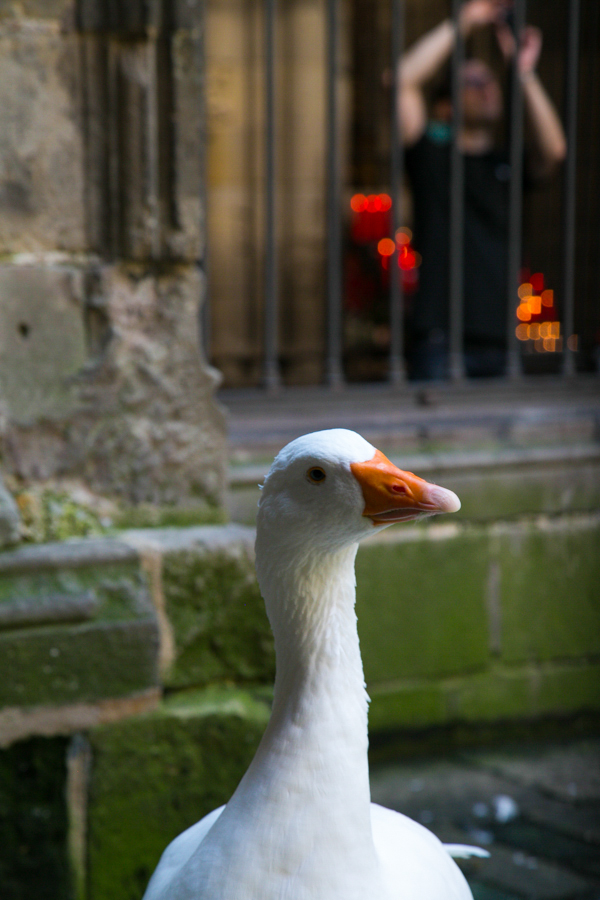excuse-my-blog-a-peek-in-the-gothic-quarter-22